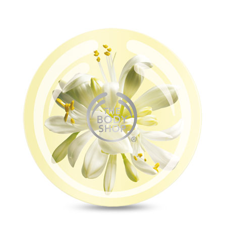 moringa body butter the body shop